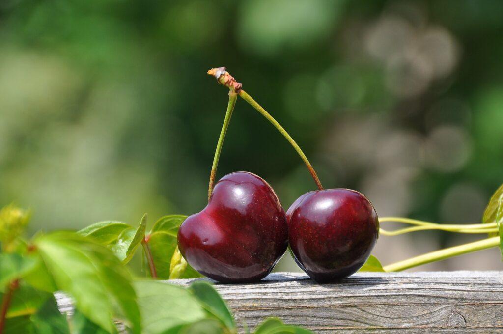cherry-pair-fruits-sweet-162689